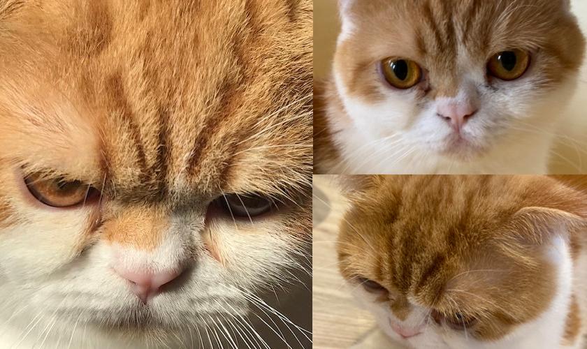 この猫より可愛いと思う猫の写真をUPするトピ