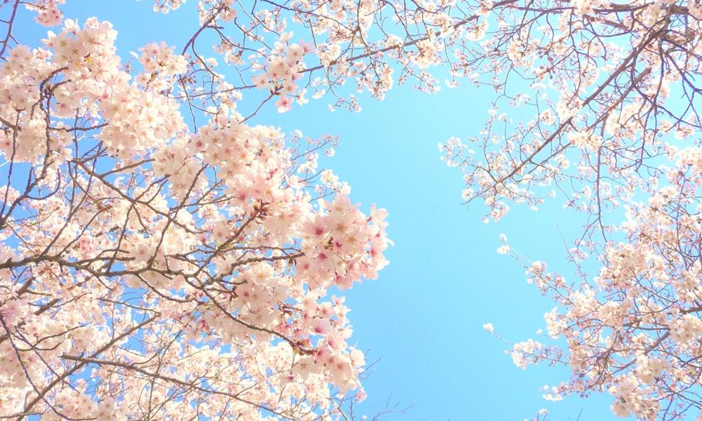 春を感じる食材は何ですか?